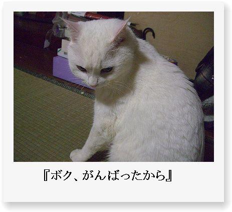 b0097145_013875.jpg