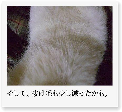 b0097145_0155.jpg