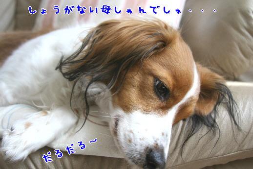 d0013149_0103310.jpg