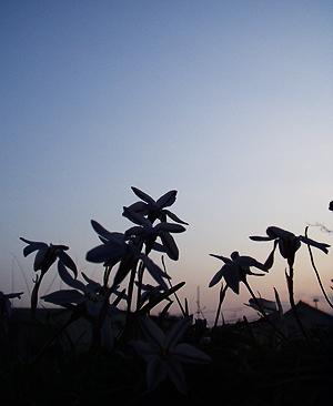今咲く花を見つめたら_e0071652_13315338.jpg