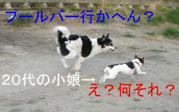f0053952_1335926.jpg