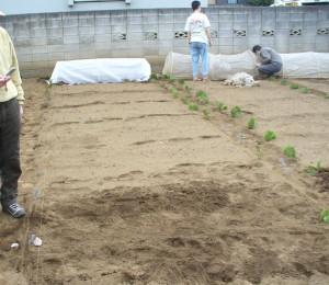 家庭菜園入門 ジャガイモ植え付けと葉物の種まき_e0047859_15532149.jpg