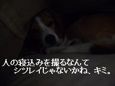 b0098660_826552.jpg