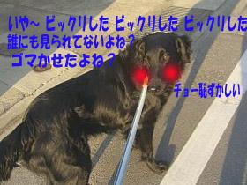 d0043478_094044.jpg