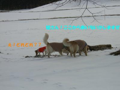 c0106480_22151021.jpg