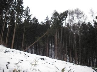 「梁川源流めぐり」 伐採・製材の現場見学会 終了しました。_f0105112_15534826.jpg