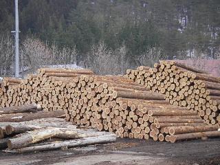 「梁川源流めぐり」 伐採・製材の現場見学会 終了しました。_f0105112_15572742.jpg