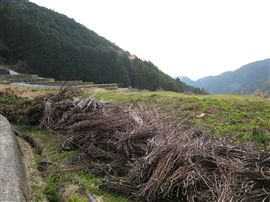 林地残材で田焼き_e0002820_164332.jpg