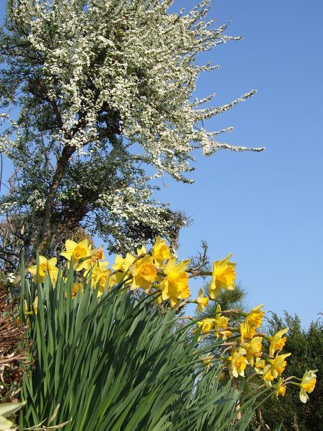 近所の春_b0089338_1155269.jpg