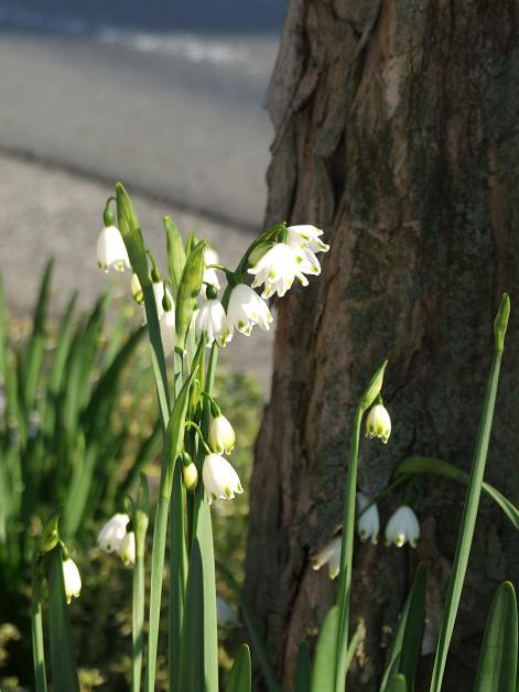 近所の春_b0089338_116529.jpg