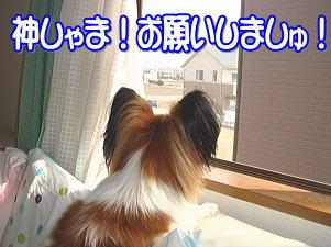 f0011845_116338.jpg