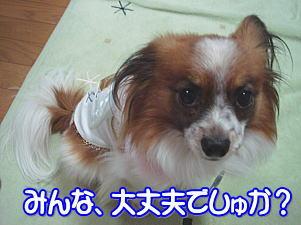 f0011845_116819.jpg