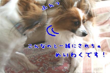 d0013149_054989.jpg