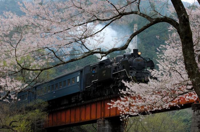 春は大井川から!_e0056449_2124018.jpg