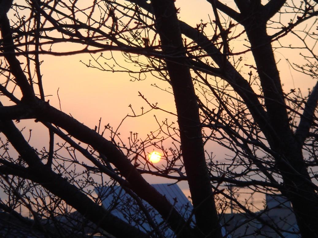 愛宕山からの夕陽_c0108460_20252118.jpg