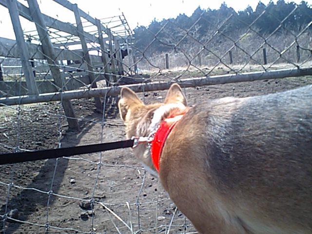 術後のアホ犬・・_e0056797_231847.jpg