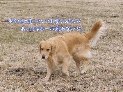 f0064906_18302771.jpg