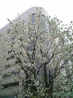 春はそこまで・・・_c0071924_20504158.jpg