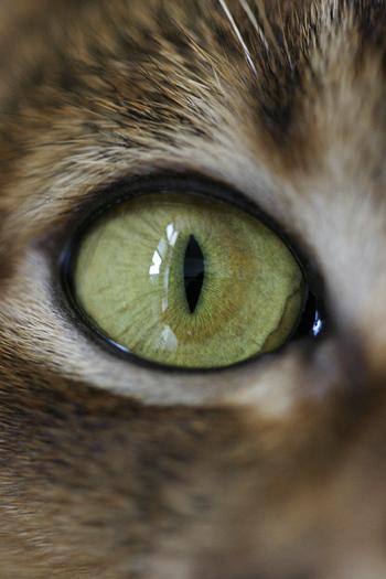 [猫的]雑種_e0090124_8211676.jpg