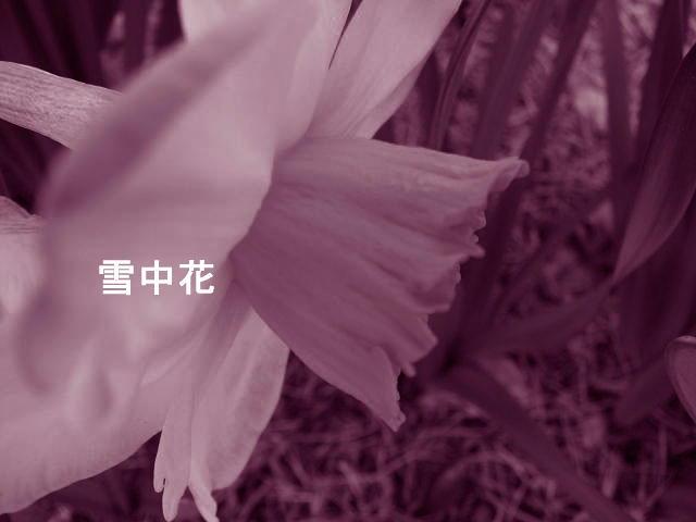 f0099535_7342675.jpg
