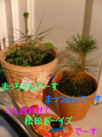 c0027188_4502263.jpg