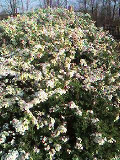 白い花/ White flower_d0090888_2154471.jpg