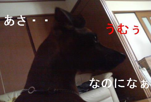 f0123589_10264423.jpg
