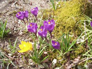 春ですね_b0058290_14404176.jpg