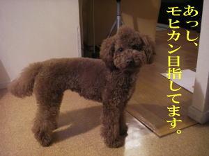 髪型_b0063399_1172659.jpg
