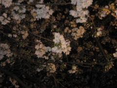 b0093920_201117.jpg