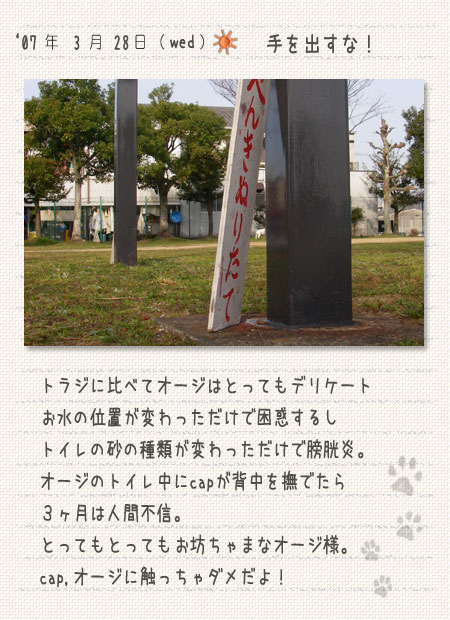 b0040323_924738.jpg