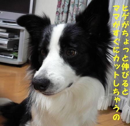 d0059230_04652100.jpg