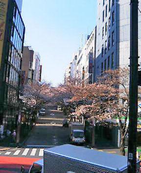 通勤途中の桜_b0100432_831768.jpg