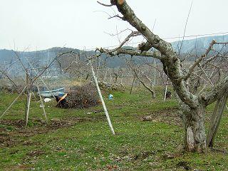 りんご畑_a0023246_2019760.jpg