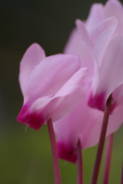ハイジの村で花を撮る_e0063851_23463210.jpg
