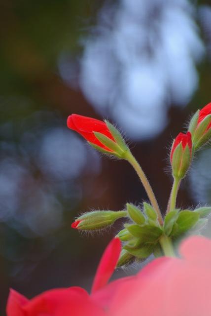 ハイジの村で花を撮る_e0063851_23465517.jpg