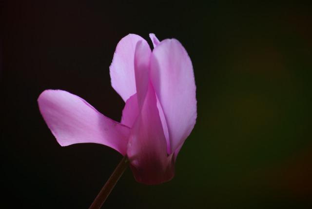 ハイジの村で花を撮る_e0063851_23471120.jpg