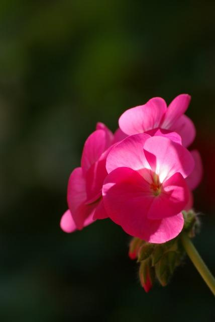 ハイジの村で花を撮る_e0063851_23472544.jpg