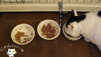 食べない日_e0031853_11451768.jpg