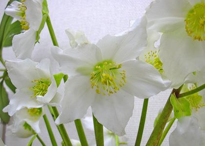3月28日 びっくりするほど咲きました。_a0001354_2224939.jpg
