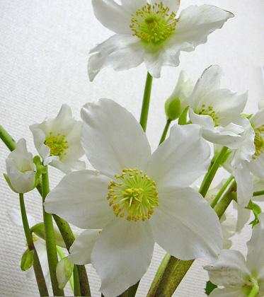 3月28日 びっくりするほど咲きました。_a0001354_223310.jpg