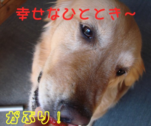 e0020166_8554639.jpg