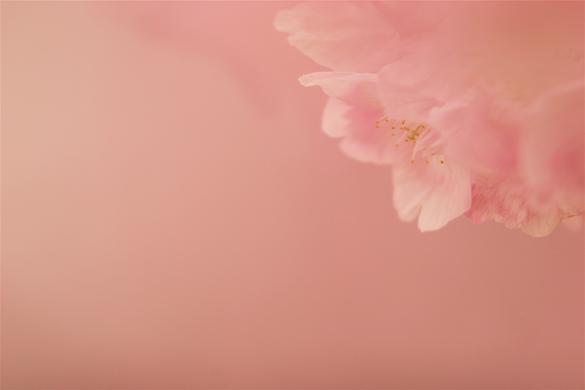 陽光桜_e0071967_22343147.jpg
