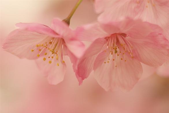 陽光桜_e0071967_22344727.jpg