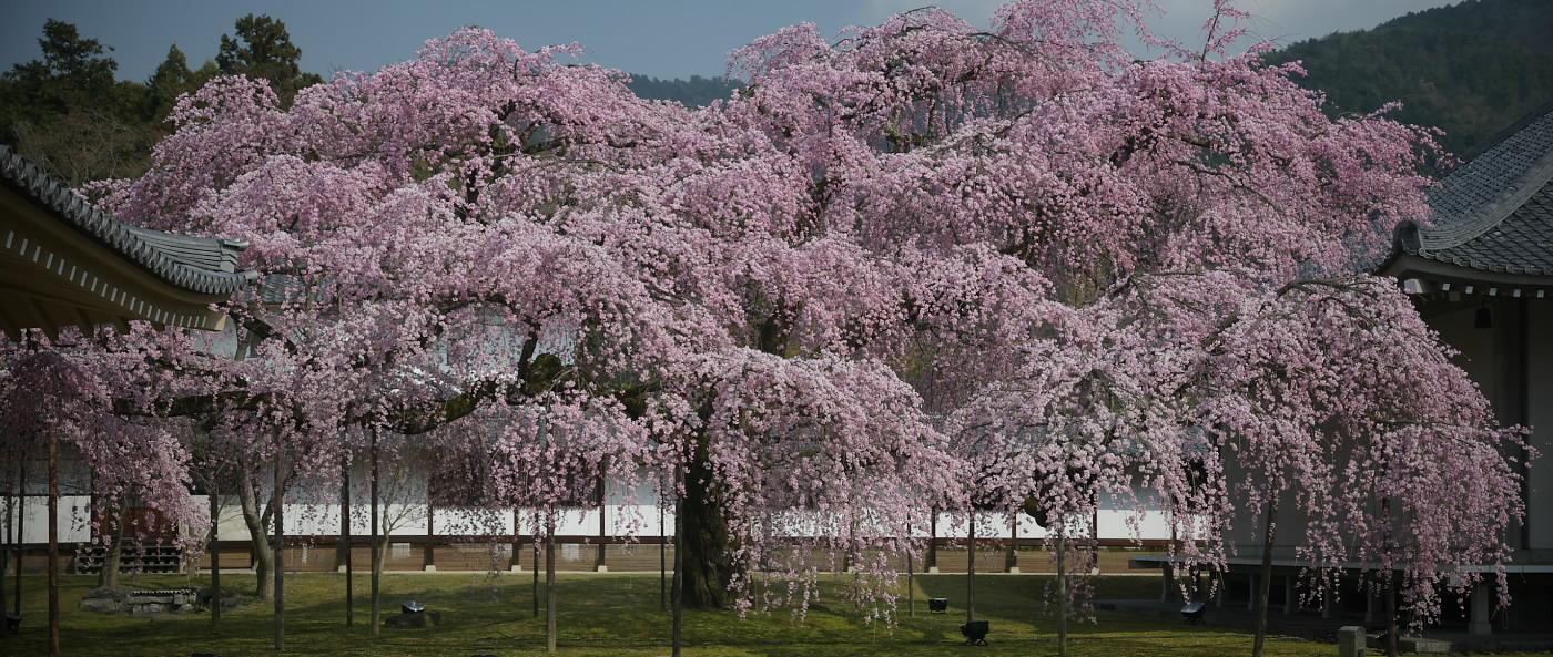京都 醍醐寺 <霊宝舘> 速報_f0021869_21495863.jpg