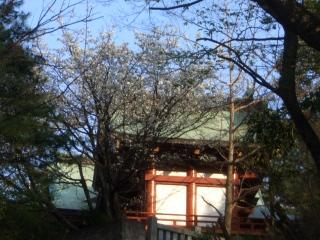 北海道のマサ、マイアミのマミへ_e0113805_20383479.jpg
