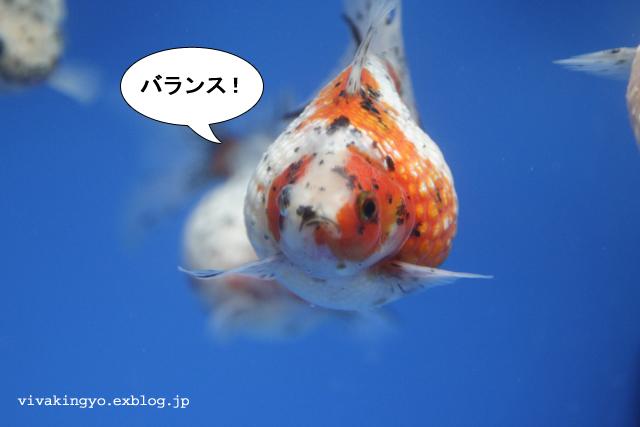 f0118214_73676.jpg