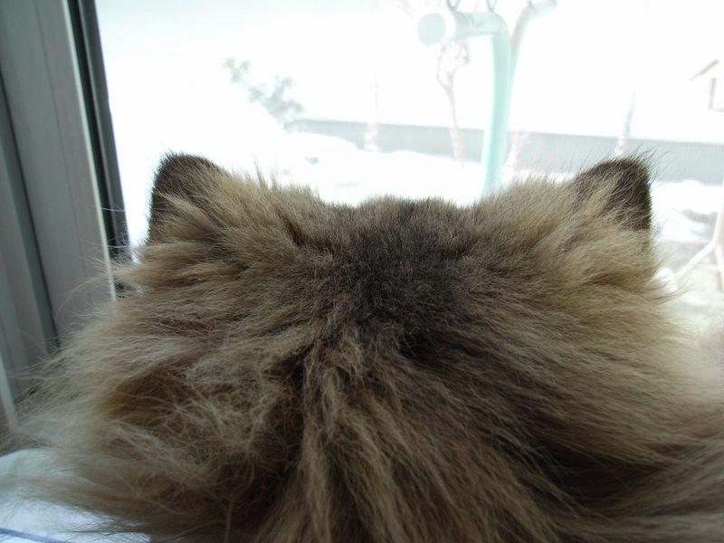 猫耳 (今朝の武蔵丸)_c0025115_18195939.jpg