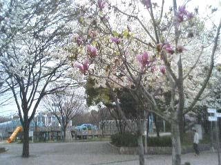 test2 八幡屋公園_a0098418_23444538.jpg