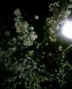 夜桜見物ふらふらり…♪_e0057018_2213494.jpg
